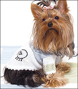 Yorkie in dog sweater