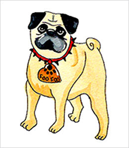 Pug with dog ID tag