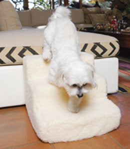 Maltese using dog stairs