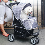 Dog in pet stroller