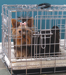 Yorkie inside dog crate