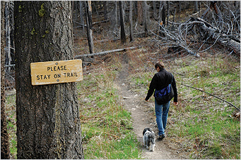 dog on a trail