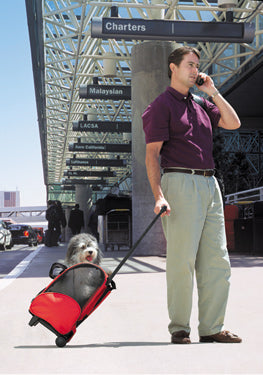 airport with dog in carrier