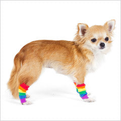 dog boots, socks and legwarmers