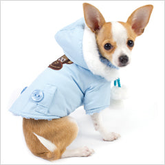 Chihuahua in small dog winter coat