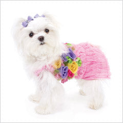 Maltese in spring dog dress
