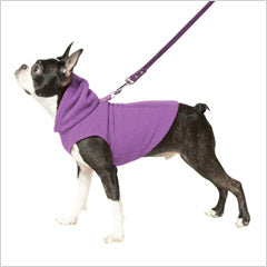 Boston Terrier wearing purple dog hoodie