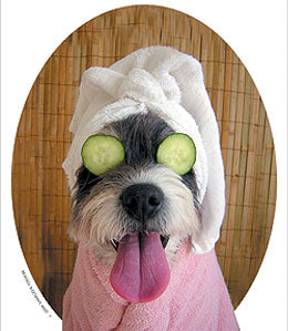 Dog at Spa with Cucumber Eyes