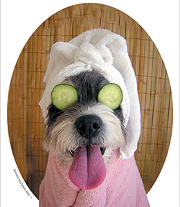 dog in spa with cucumbers over eyes