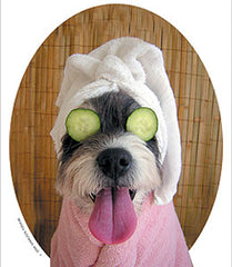dog in spa with cucumber eyes