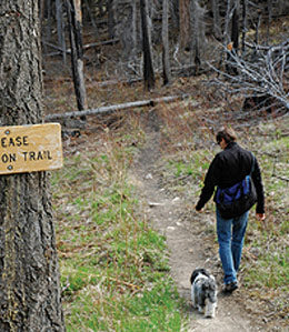 dog on trail