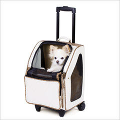 Chihuahua in dog roller carrier