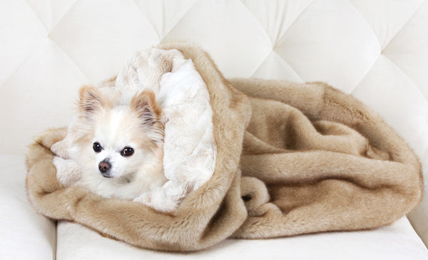 Chihuahua in Small Dog Cuddle Cup Bed