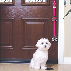 Maltese with Poochie Bells dog door alarm