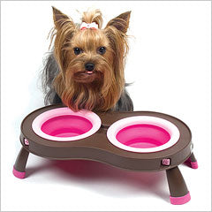 Yorkie at dog feeder