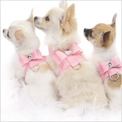 Chihuahuas wearing Susan Lanci Tinkie dog harnesses