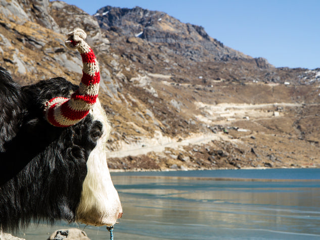 Yak at lake in Himalayan mountains