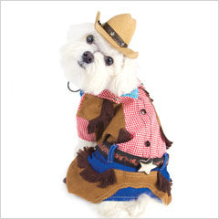 Maltese wearing Cowboy Dog Costume