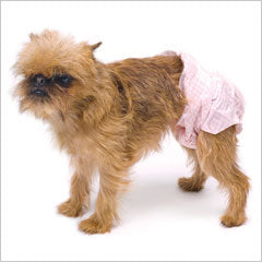 Brussels Griffon dog wearing dog sanitary pants