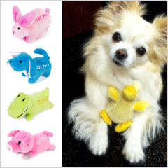 Chihuahua with tiny dog toys