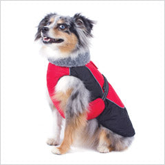 Toy Australian Shepherd wearing winter jacket