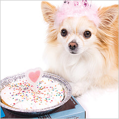 Chihuahua with Birthday Dog Treat