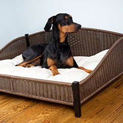Doberman Pinscher in large dog bed