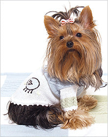 Yorkie wearing dog sweater