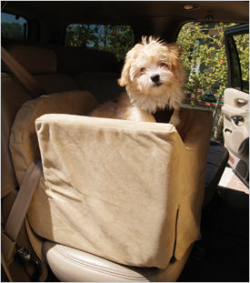 dog in car seat