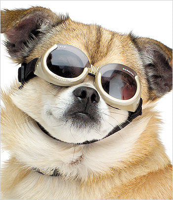 Doggles sunglasses for dogs in chrome