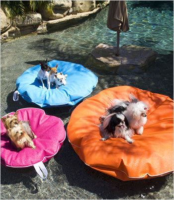 dogs on 3 different pool floats