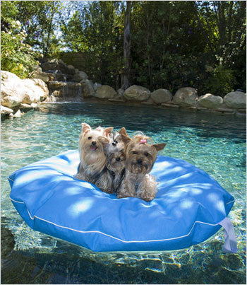 Yorkies on Medium pool float