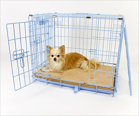 Chihuahua in pink dog crate