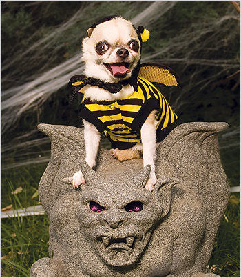 Chihuahua in honey bee costume
