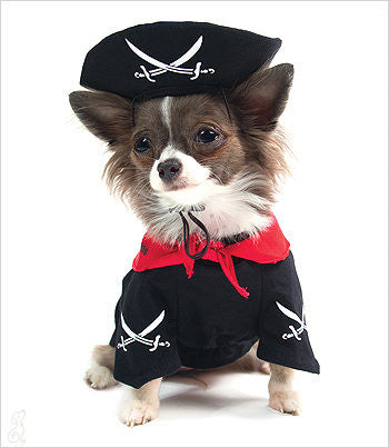 Champion chihuahua modeling a pirate dog costume
