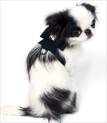 Black Big Bow harness on Japanese Chin