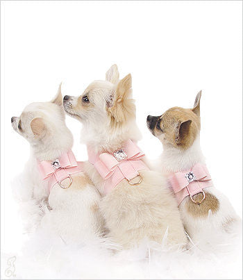 Puppy Pink Big Bow Harnesses on Chihuahua puppies