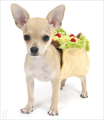 Chihuahua wearing taco dog costume - side view