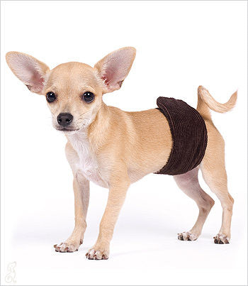Brown Corduroy Belly Band for Boy Dogs
