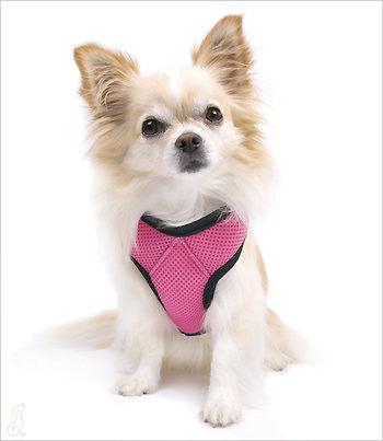 Chihuahua wearing pink car vest harness