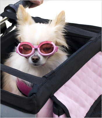 Dog in pink bike basket with doggles
