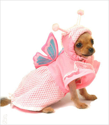 Chihuahua wearing a Butterfly Dog Costume