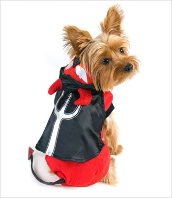 Yorkie in Devil Dog Costume