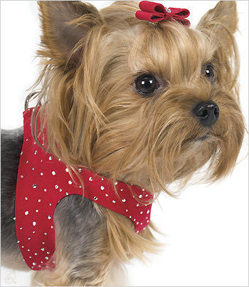 yorkie wearing red susan lanci step in stardust harness