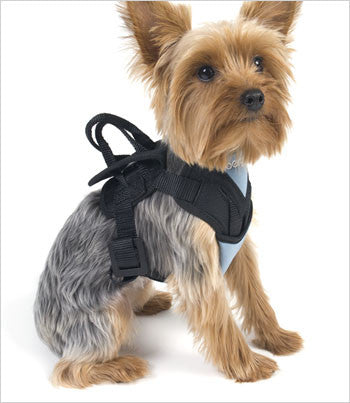 Yorkie wearing dog car harness
