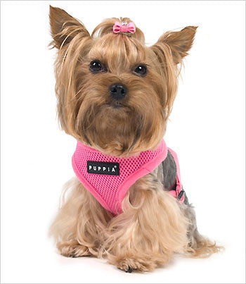 Yorkie in Puppia Dog Harness