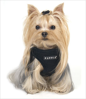 Yorkie Wearing Puppia Vest Dog Harness