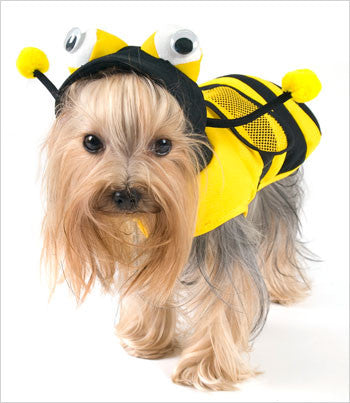 Yorkie Wearing Bee Dog Costume