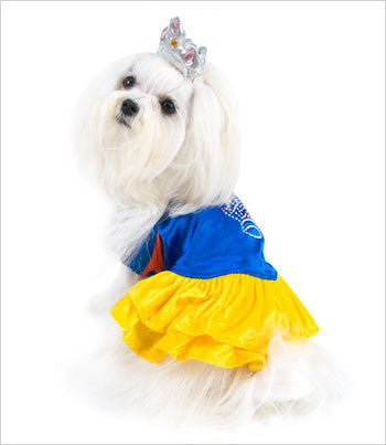 Maltese Wearing Snow Princess Dog Costume