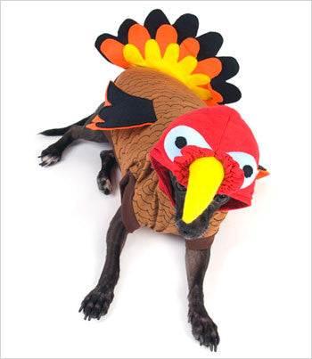 Dog Wearing Turkey Costume